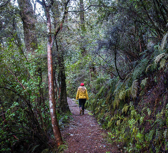 The Governors Bush walk in Aoraki Mount Cook National Park is a trail through a green fairy forest.